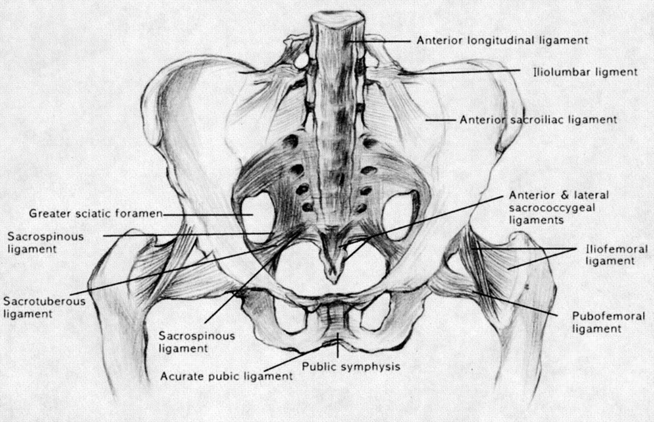 what is sacroiliac si joint pain � chirobeans