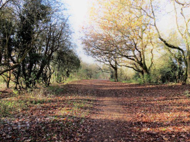www.morrisophotography.co.uk