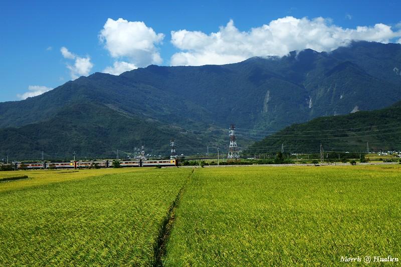 花東縱谷的稻香味 (11)