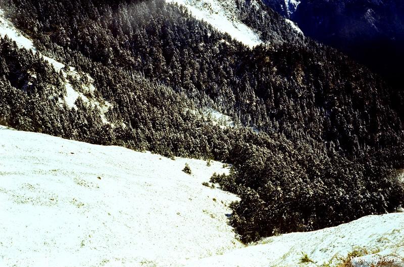 合歡山冬雪 (8)