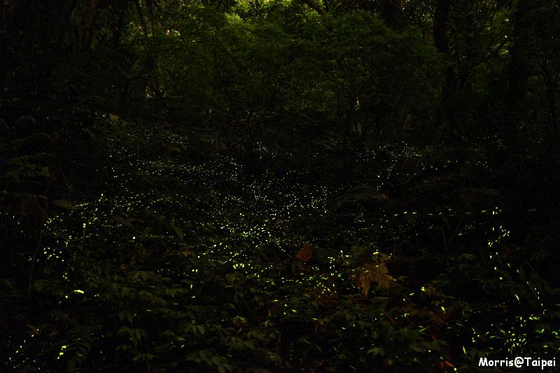 土城螢火蟲 (2)