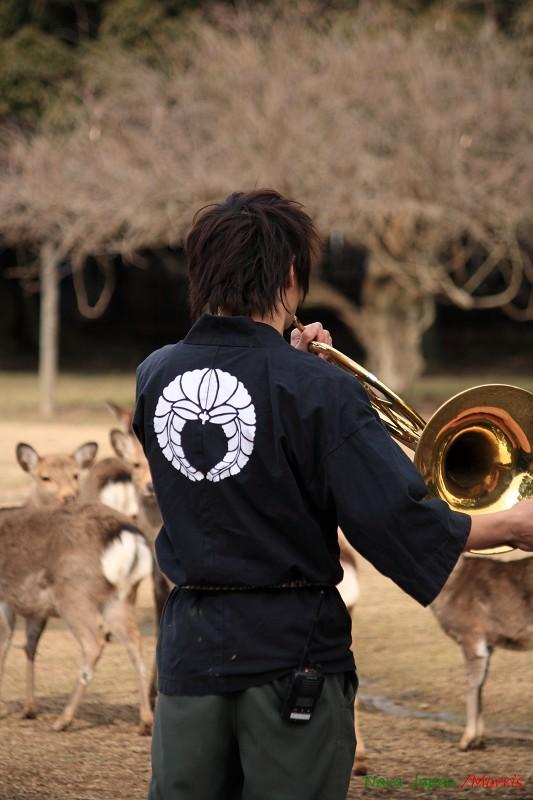 奈良 鹿寄 (36)