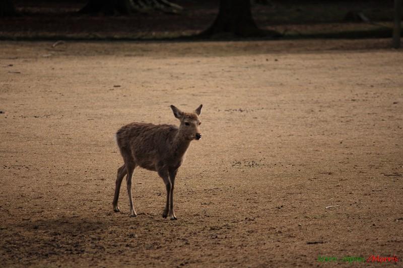 奈良 鹿寄 (48)