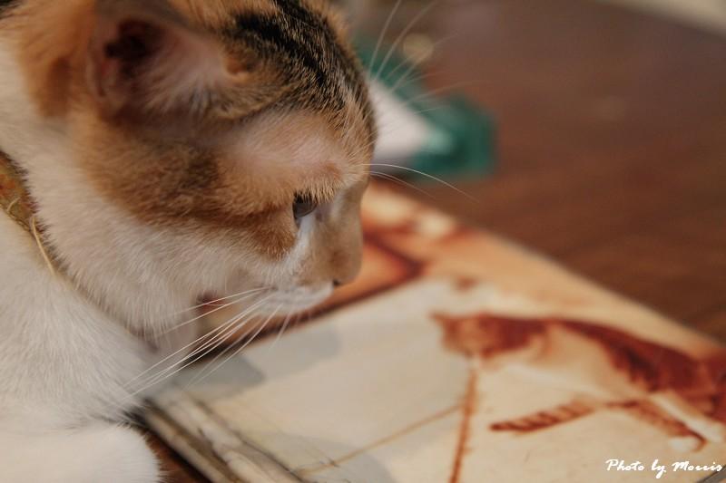 貓物語‧極簡咖啡 (22)