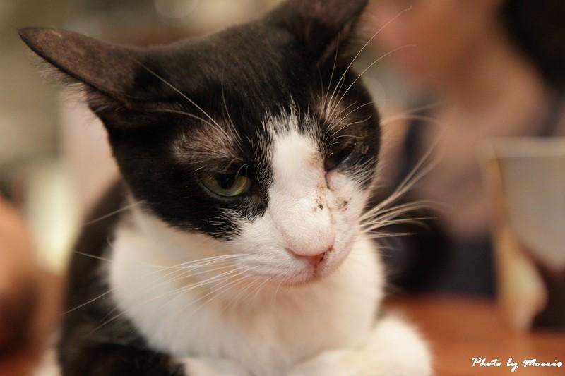 貓物語‧極簡咖啡 (11)