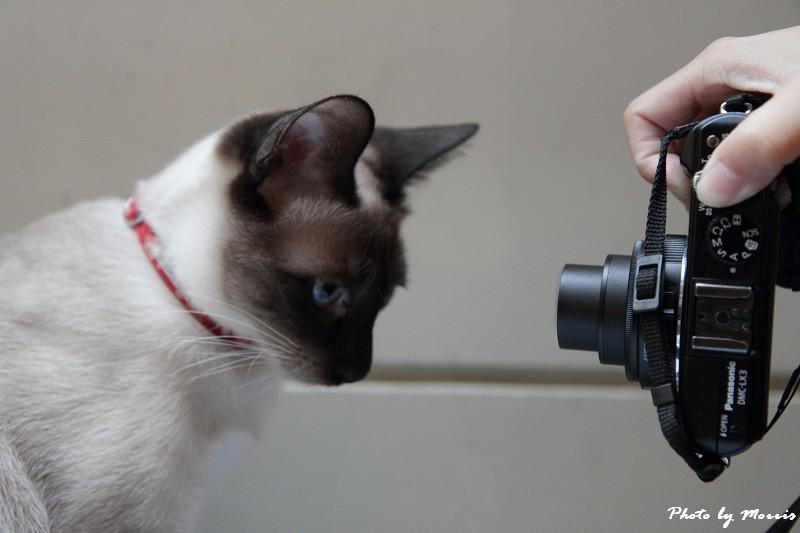 貓物語‧極簡咖啡 (16)