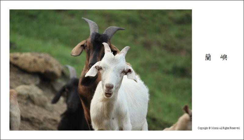 山羊的國度 (15)
