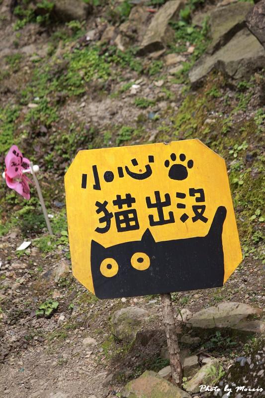 散步猴硐貓村 (19)