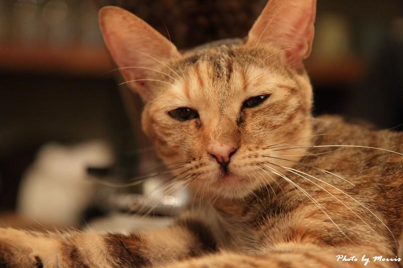 貓物語‧極簡咖啡 (43)