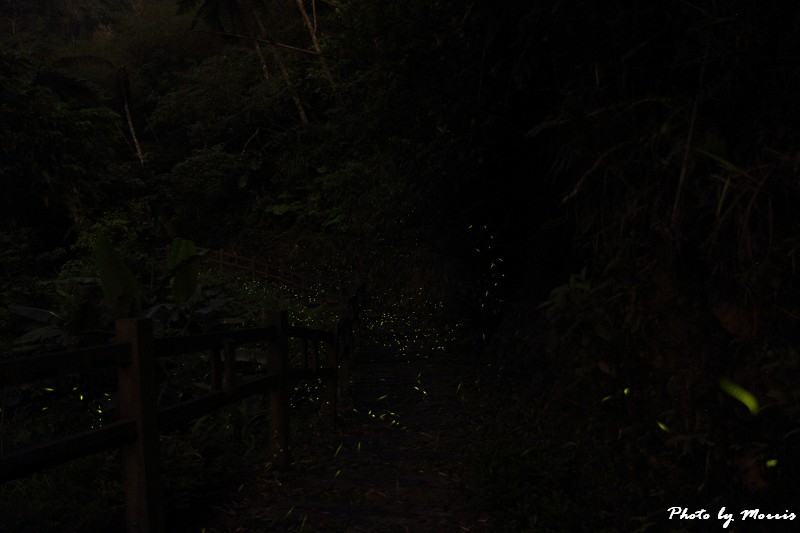 螢光晚會 (4)