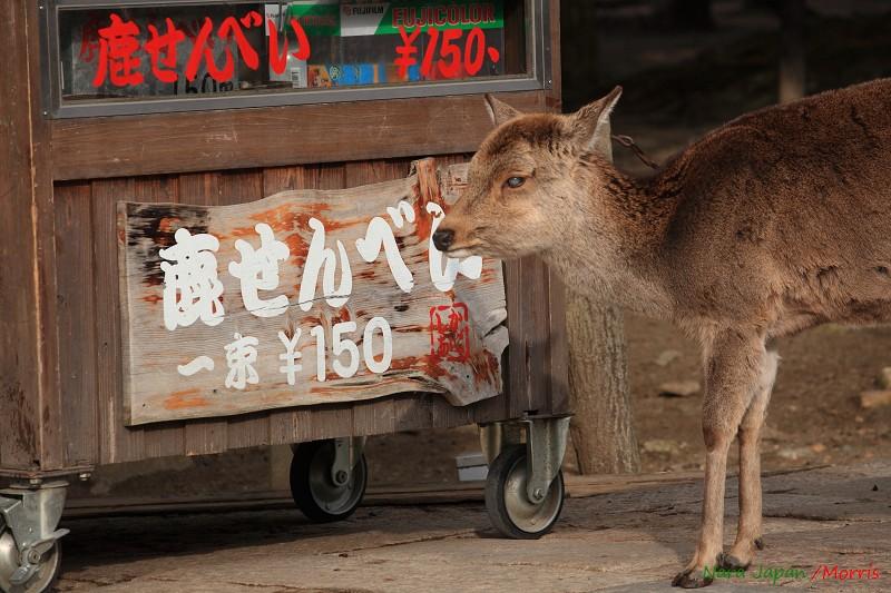 奈良 鹿寄 (11)