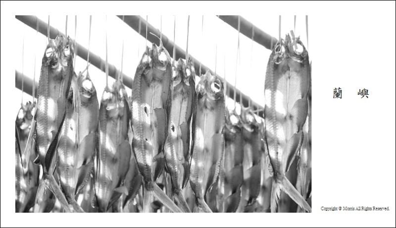 飛魚季 (40)