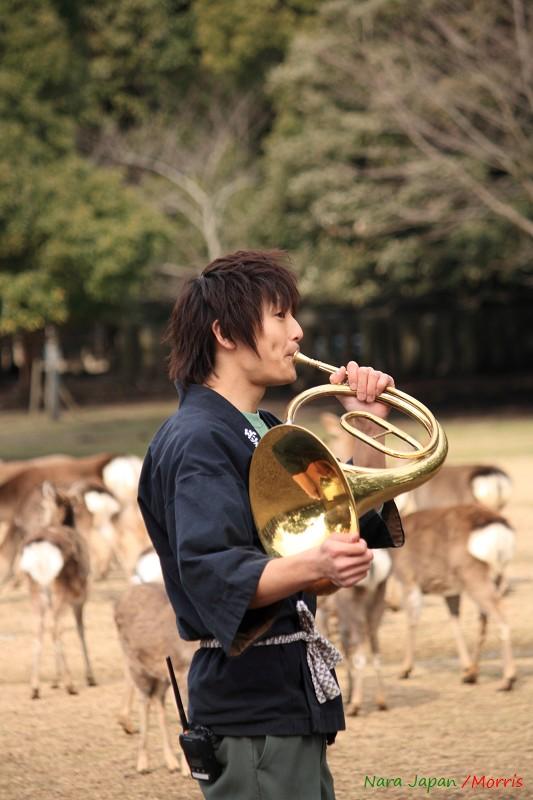 奈良 鹿寄 (38)