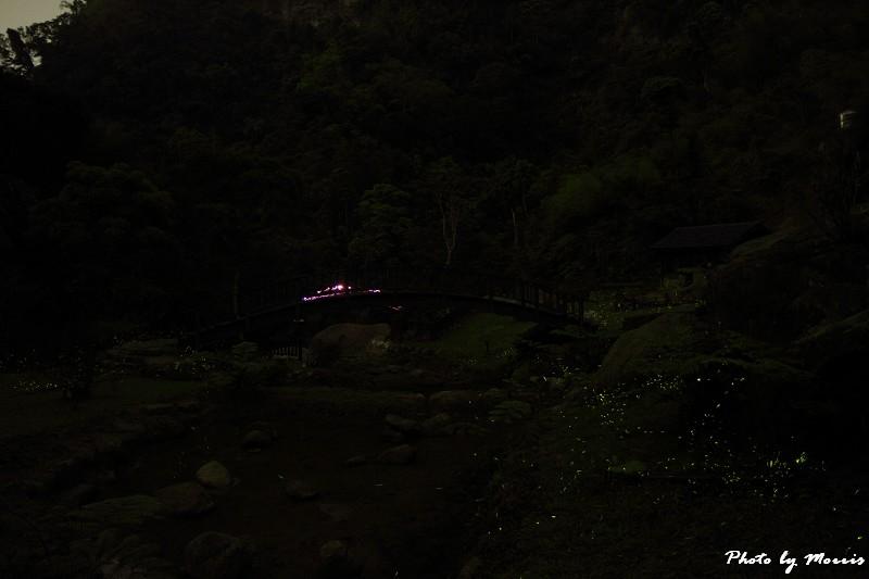 螢光晚會 (7)