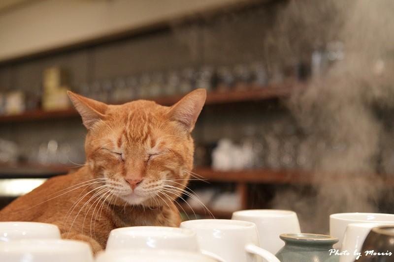 貓物語‧極簡咖啡 (20)