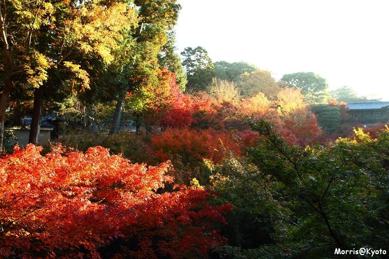 東福寺 (1)