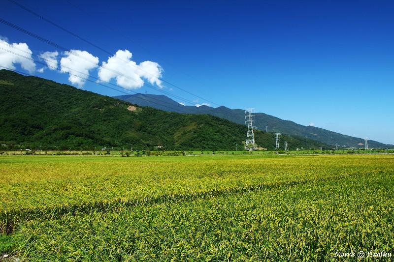 花東縱谷的稻香味 (5)
