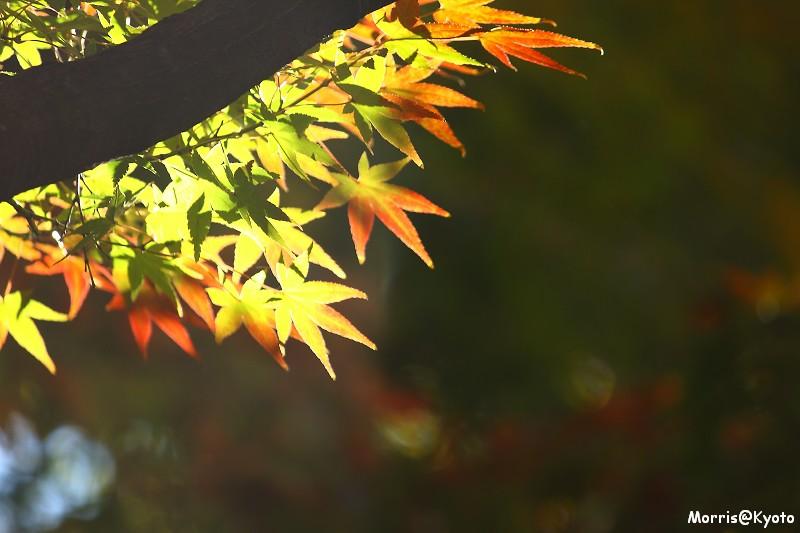 東福寺 (57)