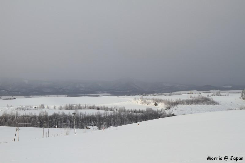 美瑛之冬一 (59)