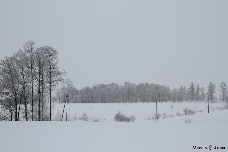 美瑛之冬一 (90)