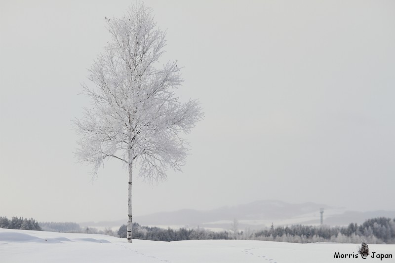 美瑛之冬一 (69)
