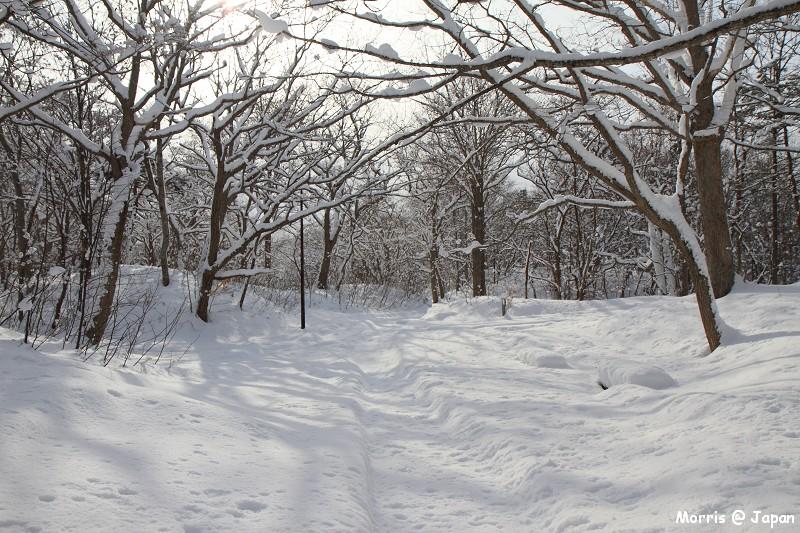 大沼公園 (74)