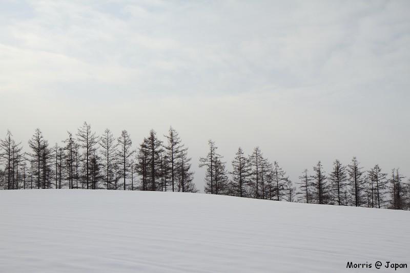 美瑛之冬 二 (34)