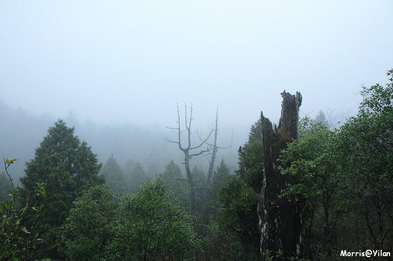 翠峰湖環山步道 (31)