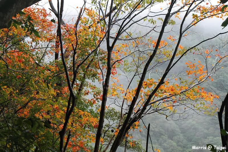 雲森瀑布 楓紅楓落 (30)