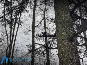 Белка на дереве в парке