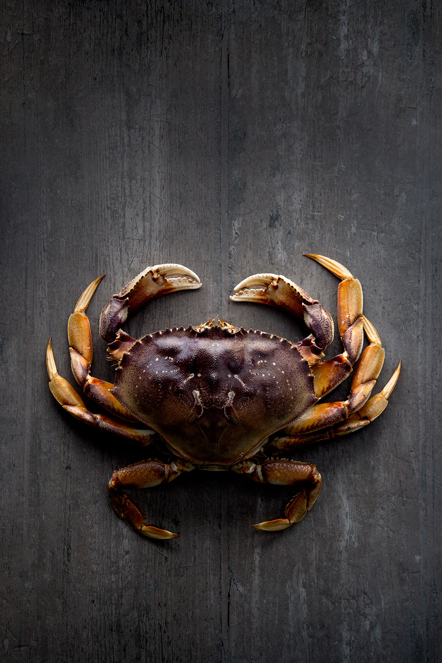 Crab still life from mortar-and-pestle.ca