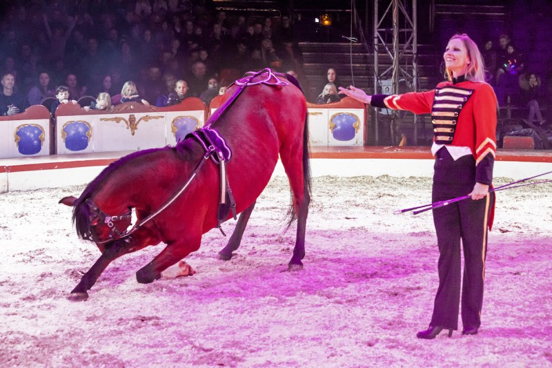 Cirkus ifølge Bubber - Cirkus Arena