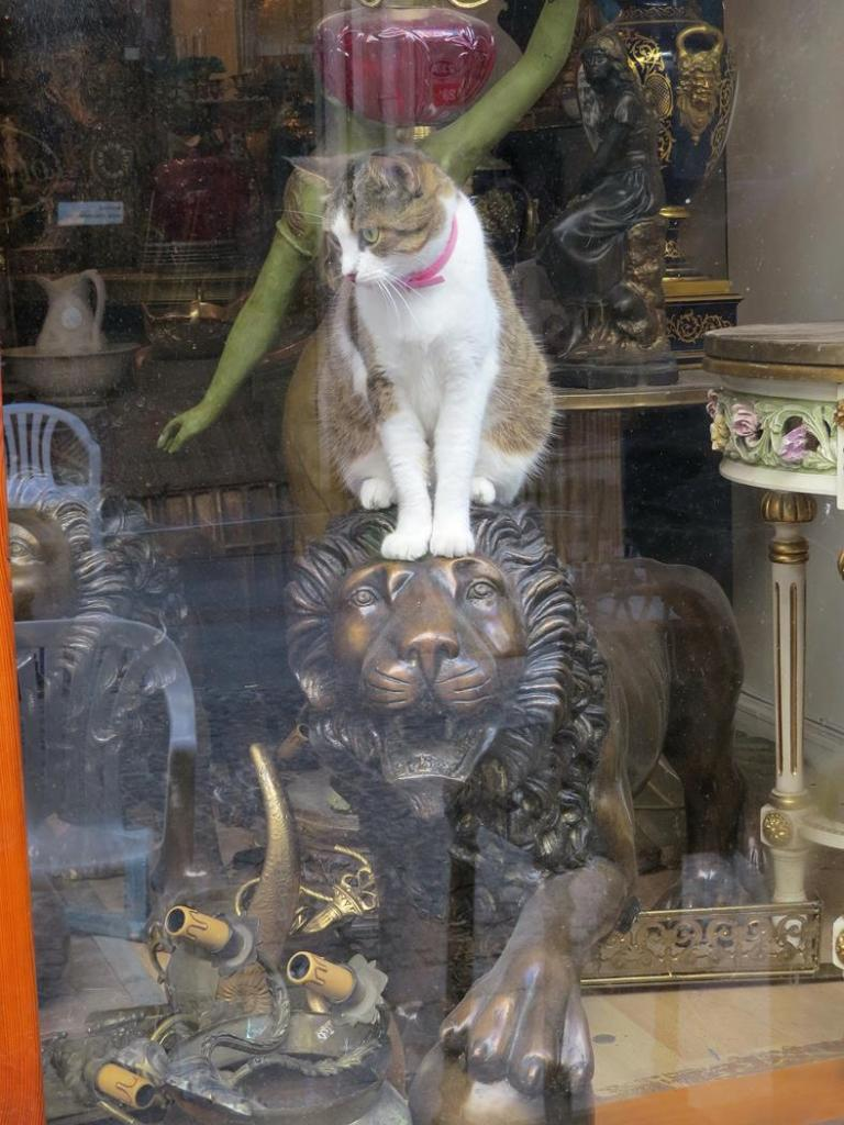 Katze auf Löwe, Kadiköy, Istanbul