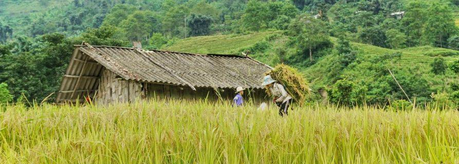 Sapa und die Reisterrassen