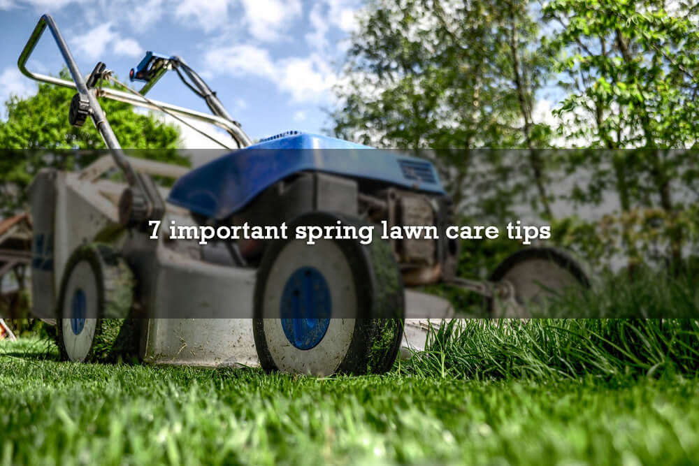 7 important spring lawn care tips