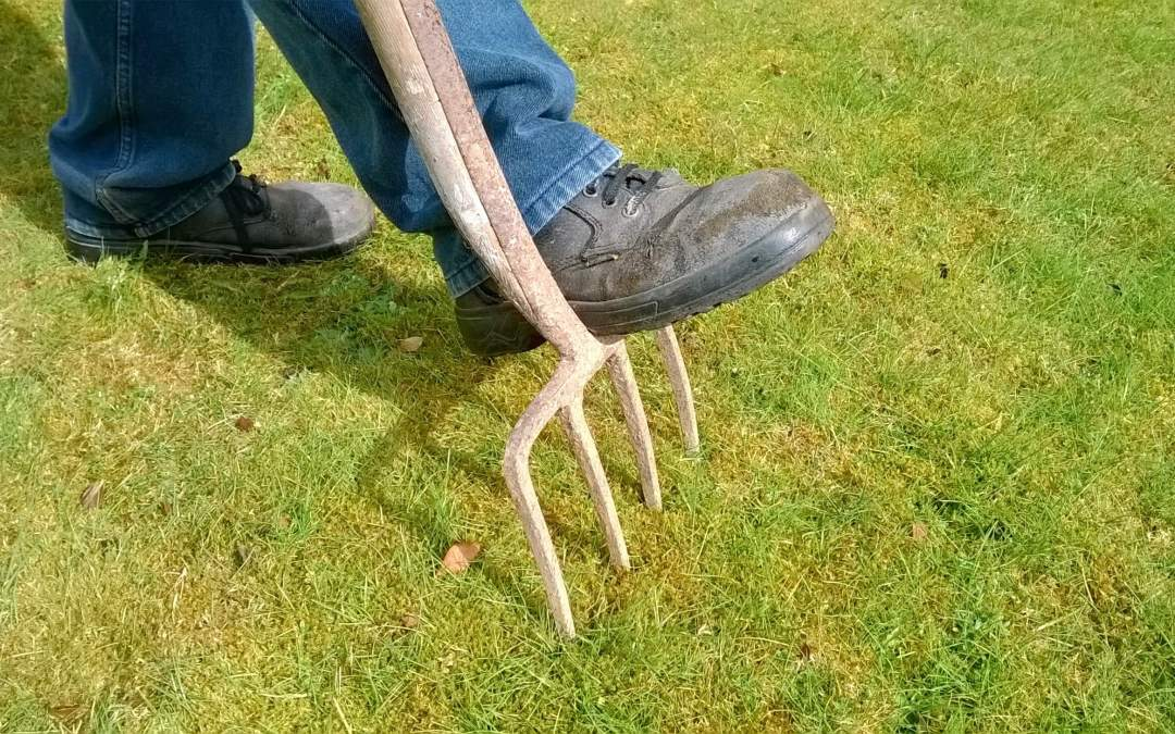 5 things you should do to ready your lawn for winter
