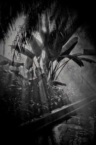 photoforgephoto-6