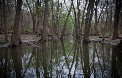 Creek Reflection copy