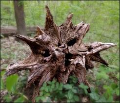 Stump Monster (4-22-12) Ginsburgh