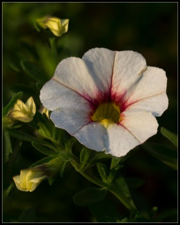 White Flower with Red Center