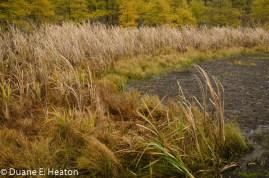 dheaton - Vegetation Zones