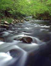 468-75 Middle Prong Little River in Spring V x1000