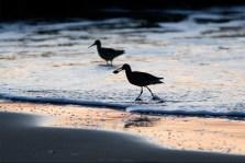 Gulls at McClure's Beach