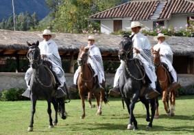 Paso+horses