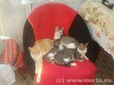 Vizita in sat - 24 iulie 2013 - caini si pisici - 19