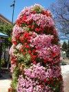 Summer flowers in Malaga