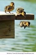 Taking-the-1st-plunge-resizecrop--