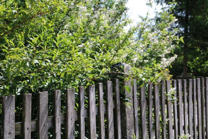 Hofrundgang im Juni – alles blüht und spießt und wächst und gedeiht