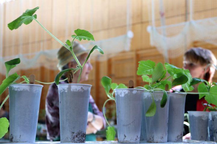 Pflanzenmarkt 2017 – mosauerin blickt hinter die Kulissen