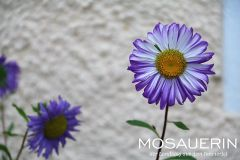 2017-08-mosauerin-hofrundgang-august-38